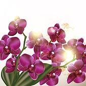 Beautiful background with orchid  flowers