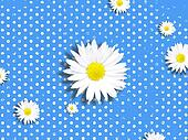 Camomile Abstract Background
