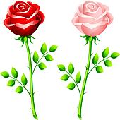 realistic red and pink rose on a stem