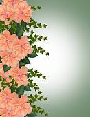 Floral border Hibiscus peach