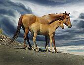MustangMare