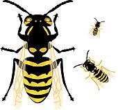 Wasp Jellow Jacket Vector