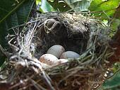 The bird nest with eggs