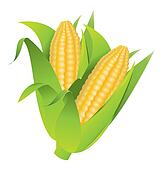 Corn Clip Art - Royalty Free - GoGraph