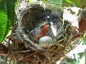The birth of a bird. El nido pajaro