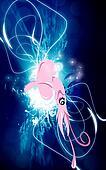 A squid