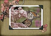 Vintage Monarchs