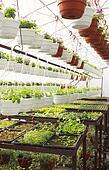 hot-house plants
