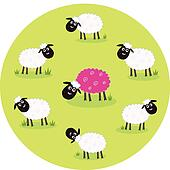 Pink and white sheep
