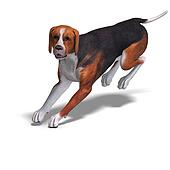 Austrian Black Dog. 3D rendering with clipping path and shadow over white