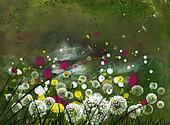 flowering dandelion