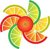Grapefruit, lemon, lime and orange slices