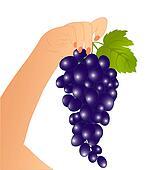 Grape in a hand