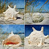 Seasnail house collage