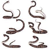 Snake-Ball Python