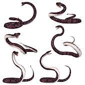 Snake-Anaconda