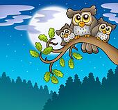 Cute owls on branch at night