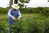 farmer in garden