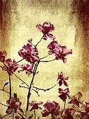 Beautiful grunge background with magnolia