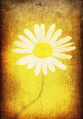 Vintage paper with camomile image, burnt paper.