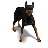 Black Doberman Dog. 3D rendering with clipping path and shadow over white