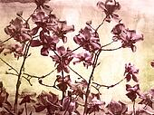 Artistic background with magnolia