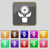 Flowers in pot icon sign. Set with eleven colored buttons for your site.