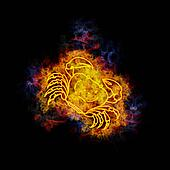 Fiery cancer zodiac sign.