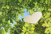 heart floting on a big tree