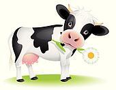 Little cow eating daisy