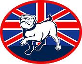 Proud English bulldog marching with Great Britain or British flag at background set inside an oval.