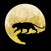 black tiger in front of moon
