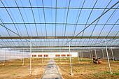 vegetable greenhouse internal structure