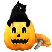 Black Cat and Halloween