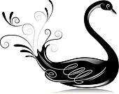 Black and White Swan