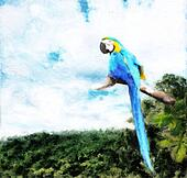 Macaw forest