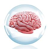 3D Brain in a crystal ball