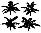 Silhouettes of the banana tree.