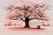 Infrared big tree