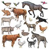 Set of farm animals - 3D render