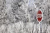 Hoar frost on trees and Stop sign