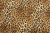 wild animal pattern background or t