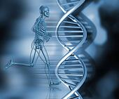 medical skeleton in running pose