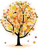 Maple tree, autumn leaf fall.