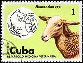 CUBA - CIRCA 1975 Sheep