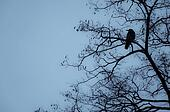 Crow is sitting on a tree