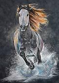 Andalusian horse run gallop