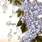 Vector grape on white