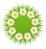 Spring freshness round card with grass and camomiles flowers