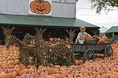 pumpkin fest display